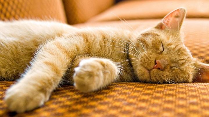 Cuantas horas duermen los gatos