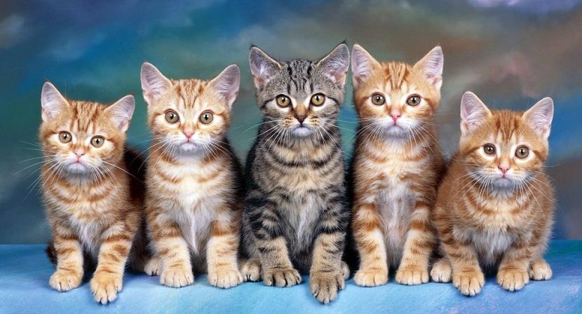 Alimentación gatos domesticos