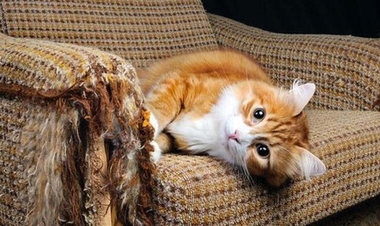 Gato rascando mueble