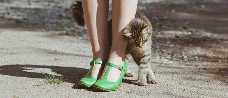 Gato recibien a su humano