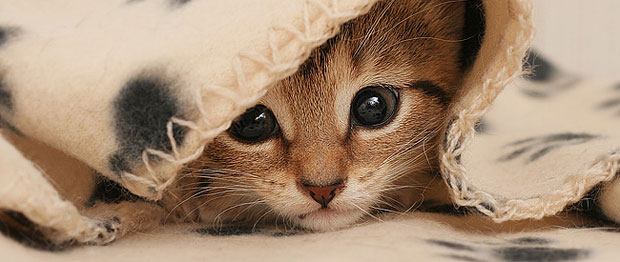 Leche evaporada para gatitos bebes