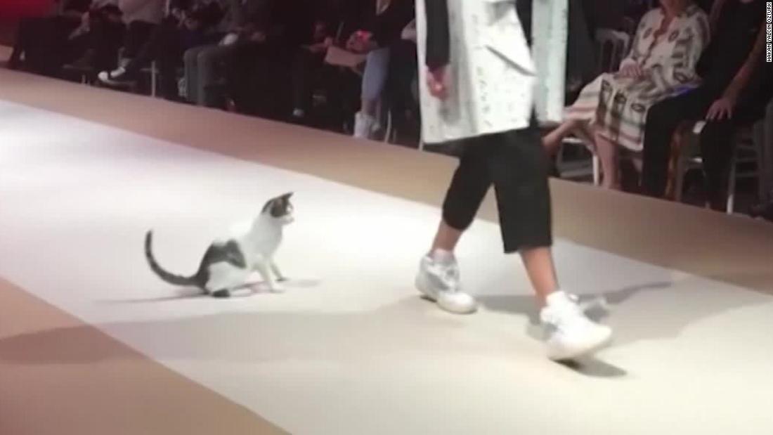 gata se roba el show en desfile de modas