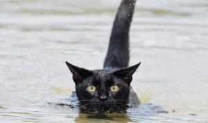 los gatos pueden beber agua de mar