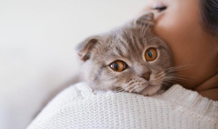 saber si tu gato te quiere