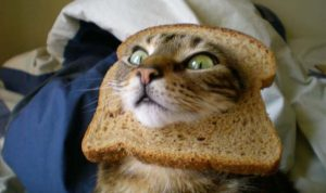 es malo el pan para los gatos
