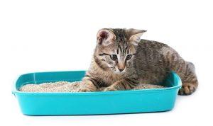 arena casera para gatos
