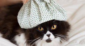 como saber si mi gato tiene fiebre