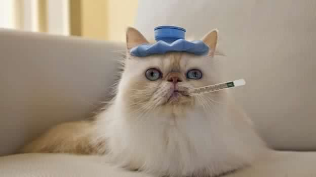gato con fiebre